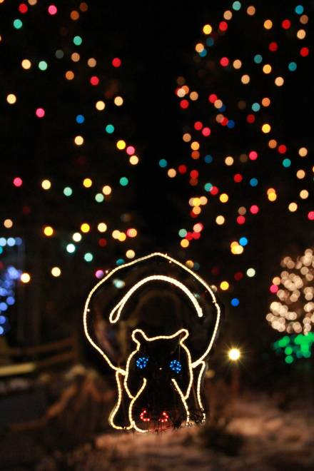 Colorado Springs Christmas 2019.December Roundup 9 Not To Miss Events Visit Colorado