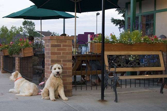 Pet Friendly Hotels Manitou Springs