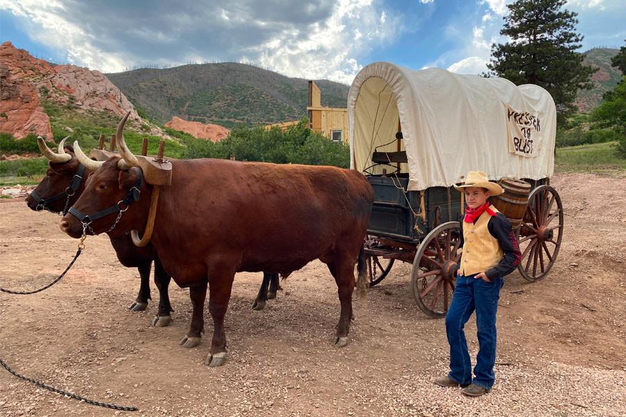 2 oxen pulling chuckwagon