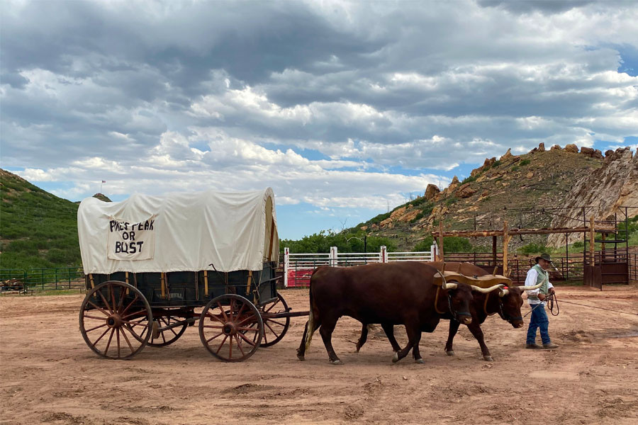 oxen pulling chuckwagon