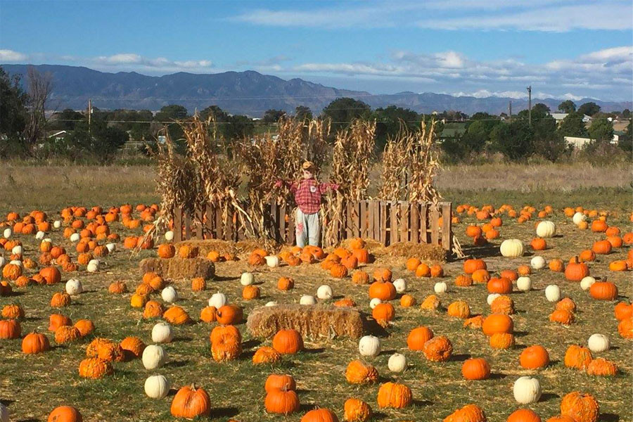 The Best Pumpkin Patches In The Colorado Springs Region