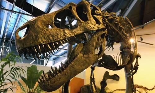 Dinosaur skeleton in the Dinosaur Resource Center Colorado Springs