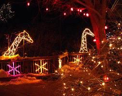 Cheyenne Mountain Zoo Electric Safari