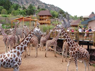 Colorado Springs Zoo - Cheyenne Mountain Zoo Colorado