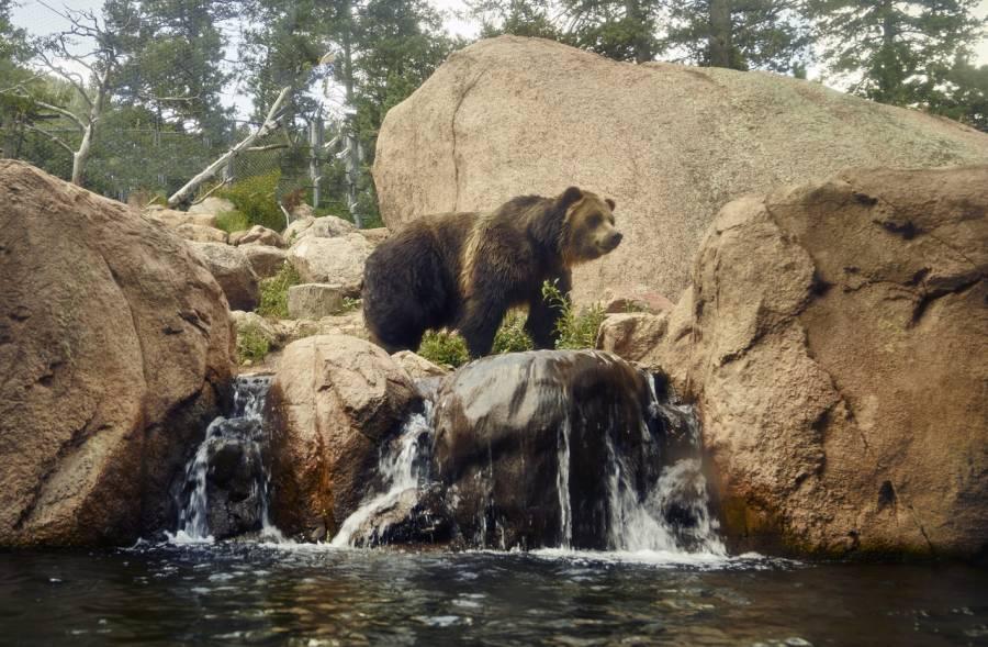bear at zoo