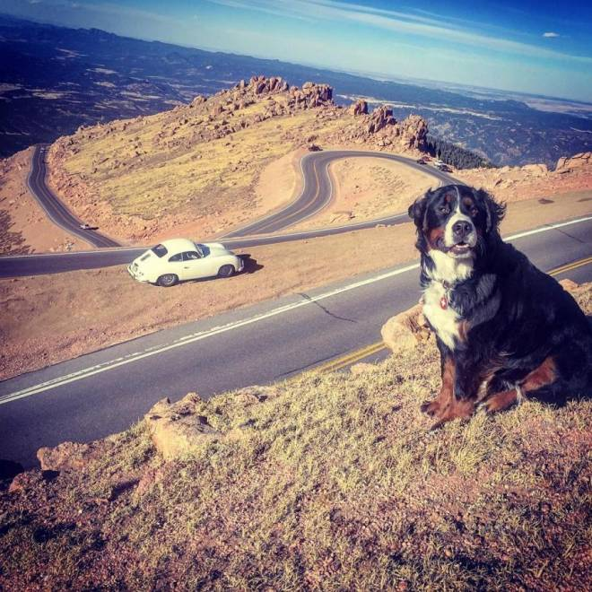 Dog at Pikes Peak